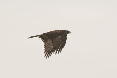 timbobagginsabroad, wildlife, birds, photography