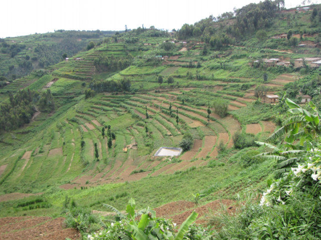 Cat 39 s eye view mpl flat cauli 39 s rwandan adventures for Terrace cultivation