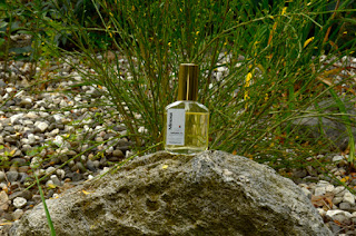 Mimosa perfume