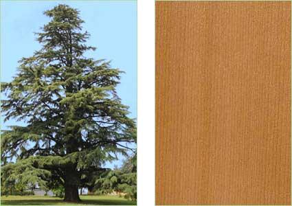 Casini Legnami - Produzione legname da costruzione e da lavoro in ...