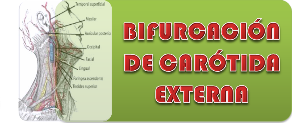APRENDE FÁCIL: CARÓTIDA EXTERNA
