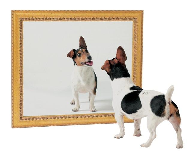 Jangankan Martin Luther , bahkan para Nabi pun melakukan Poligami dalam ALKITAB Dog-mirror1