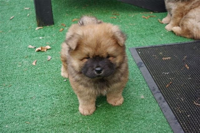 Rules Of The Jungle Kinds Of Dogs Puppies Part 3