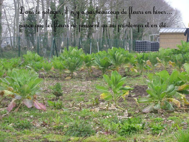 Les jardins familiaux de feunteun don l 39 cole au jardin - Bettes au jardin ...