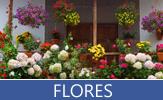Imágenes y fotografías de Flores de todos los colores