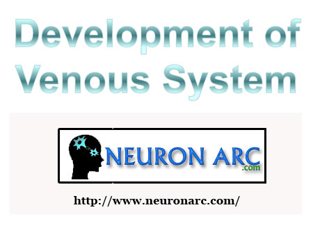 Development of the venous system