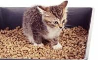 Inilah Alasan mengapa kucing mengubur kotorannya dari daniel maulana