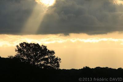 silhouette campagne arbre nuages lumière soleil Seine-et-Marne
