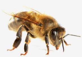 les chouchous des tambouilleuses du miel et des abeilles. Black Bedroom Furniture Sets. Home Design Ideas