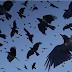 Reseña | Ferals: El que habla con los cuervos | Editorial Planeta