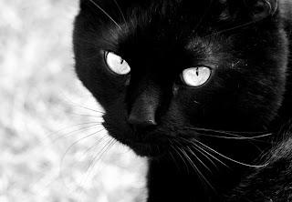 [kucing hitam]