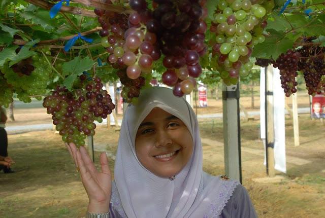 Gambar anggur Perlis