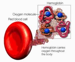 vad är hemoglobin