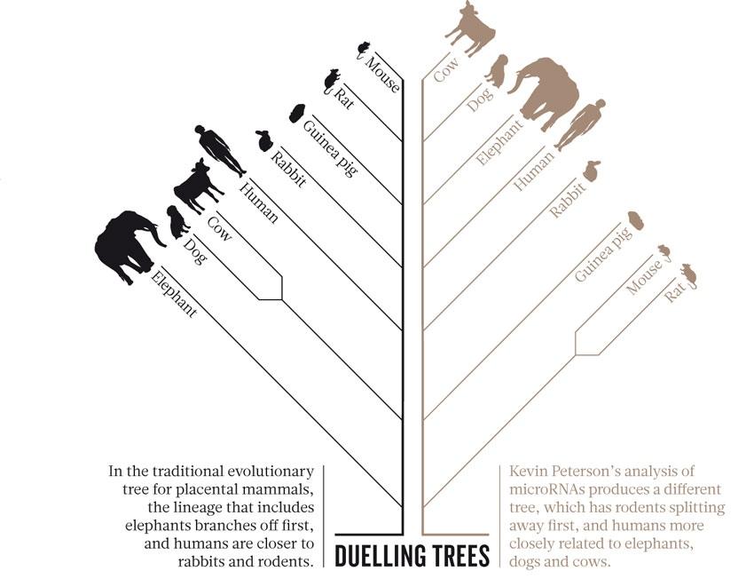 menneskets stamtræ