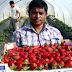 Εθνικός διασυρμός με «φράουλες και αίμα»