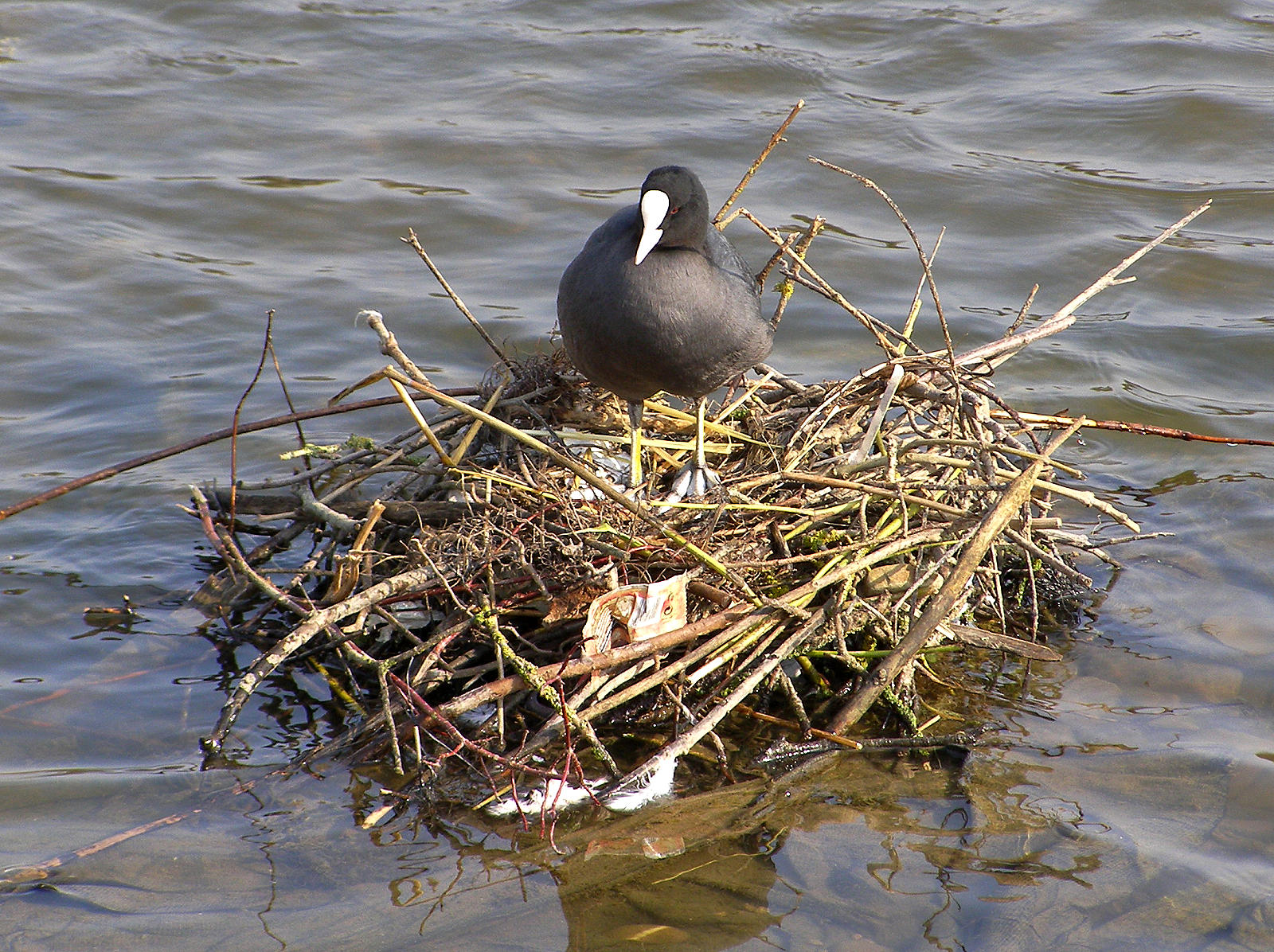 how to make a plovers nest