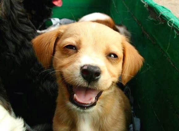 Happy dog.