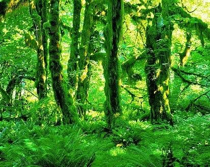 manfaat lumut bagi kehidupan,manfaat virus bagi kehidupan manusia,hutan bagi kehidupan manusia,biologi bagi kehidupan manusia,danau bagi kehidupan manusia,