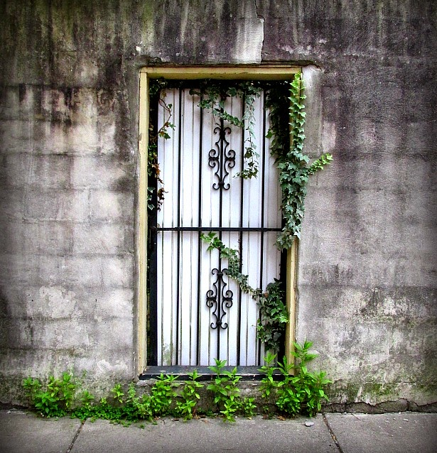#8 - This gated door leads to the backyard of a home. I love how the ivy frames the door and the green plants are growing through the cement cracks. & Photographs Of Things That Caught My Eye - Being Ron