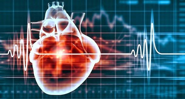 Cientistas descobrem hormona que regenera coração