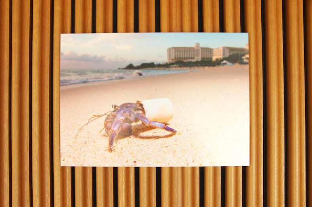 beach, resort, crab, cup,ocean