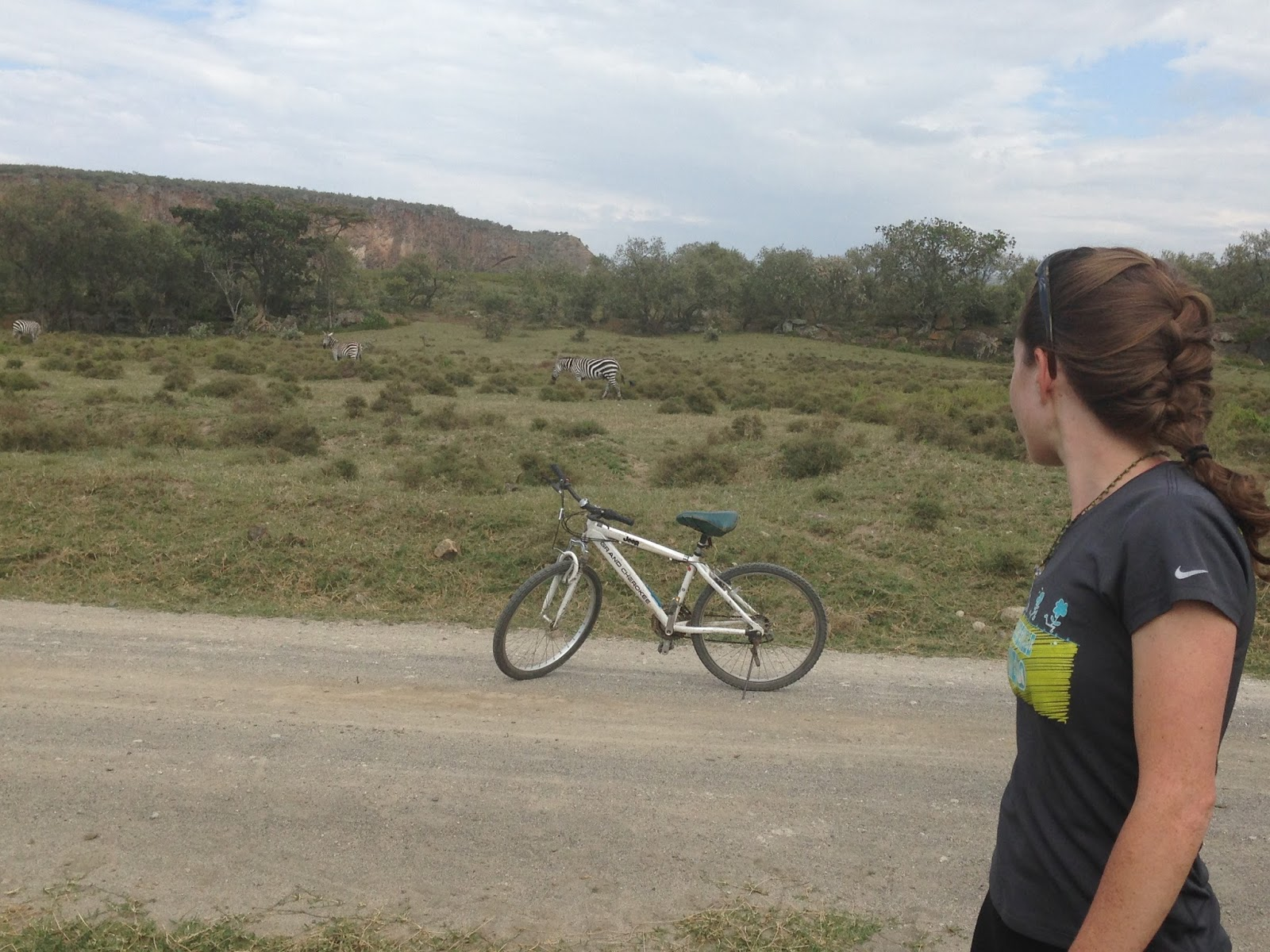 for a safari on bike  African Bush Elephant Next To Person