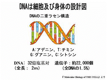 DNAの構造