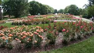 Gone Gardening Columbus Park Of Roses