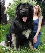 Cachorro enorme!!!