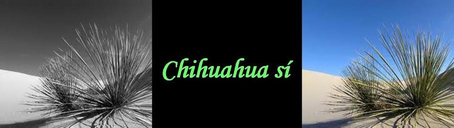 Chihuahua sí