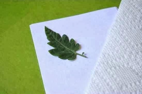 Cara membuat kreasi kerajinan tangan lukisan daun :