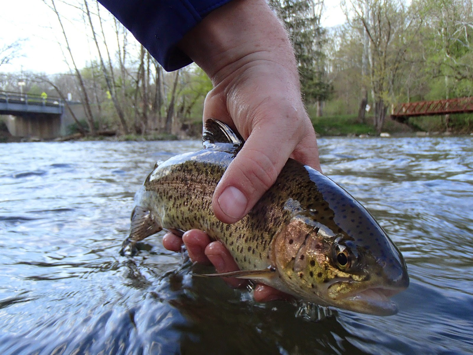 All things fly fishing spring fly fishing in pa for Fly fishing pennsylvania