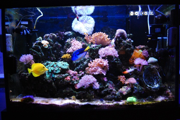 How to start a saltwater tank for Starting a saltwater fish tank