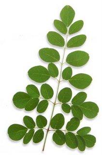 Moringa,Natural Supplements