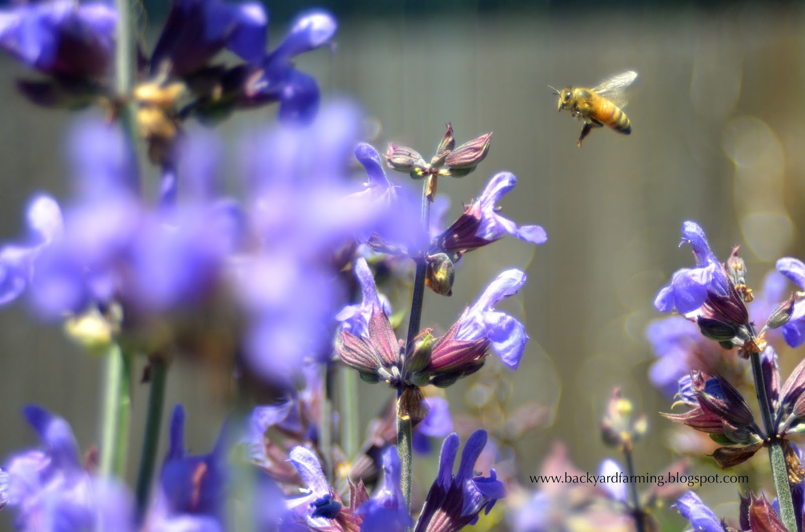Backyard Farming Plants To Attract Butterflies And Bees