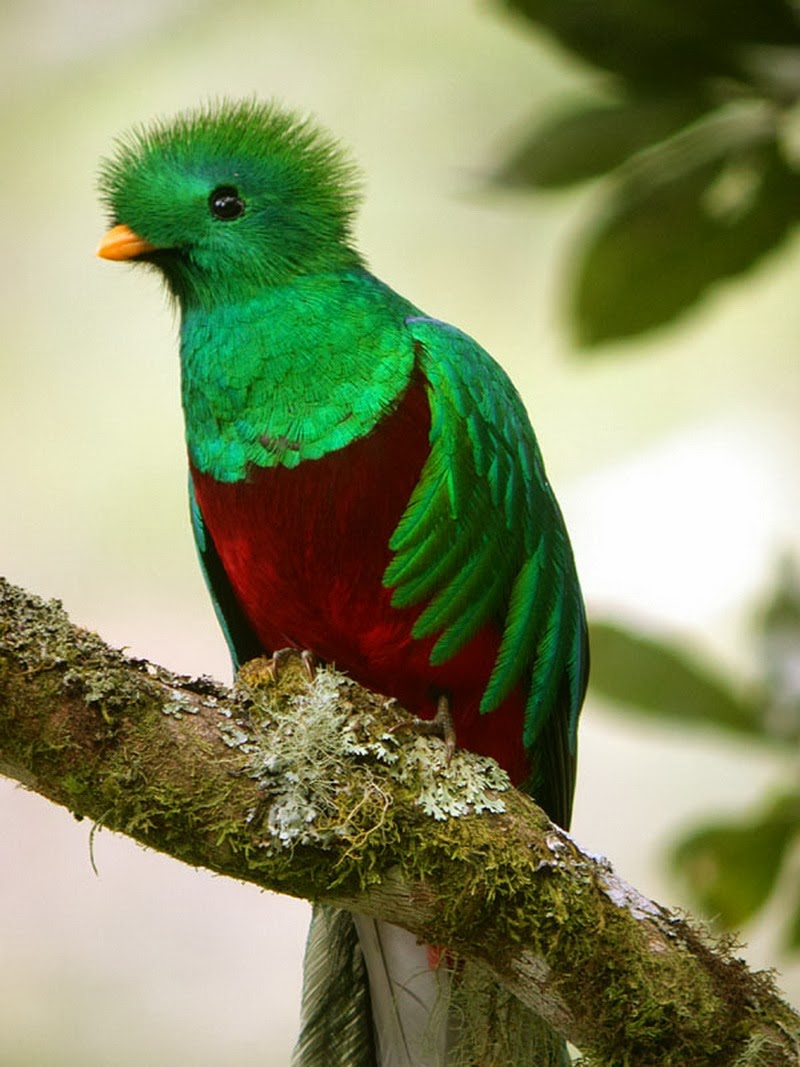 Quetzalcoatl Bird