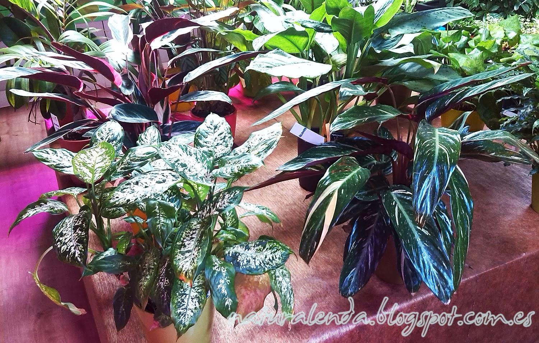 La naturaleza en casa plantas purificantes del aire interior Plantas limpiadoras de aire