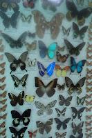 taman kupu-kupu sawahlunto