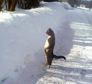 kucing Berdiri