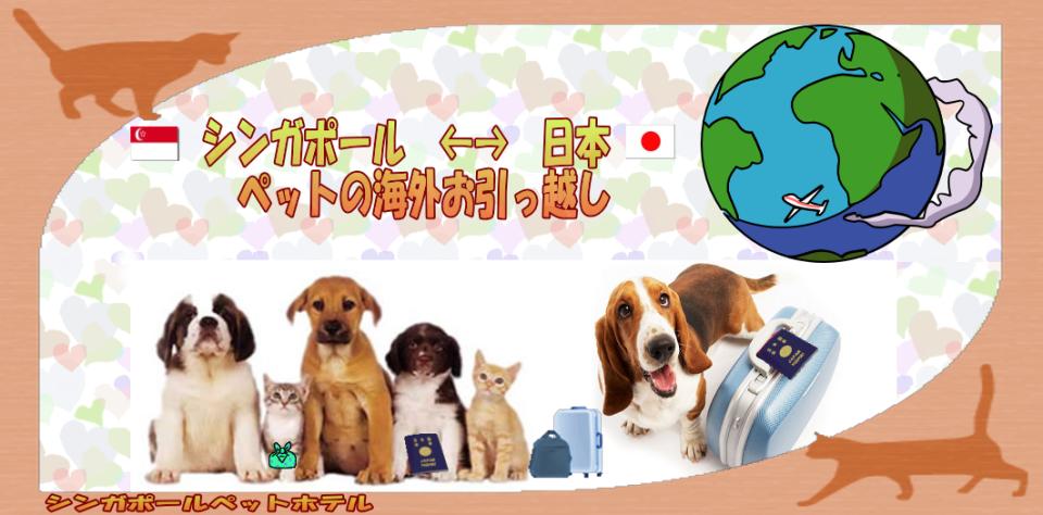 ペット(犬・猫・うさぎ・ハムスターなど)のシンガポール輸出入をお手伝いします