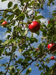 Gallery-autumn-apples