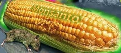Allt om GMO på 5 minuter (video)