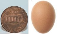 Telur ayam terkecil di dunia