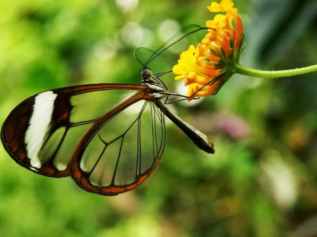 """<img src=""""http://4.bp.blogspot.com/-lIvOVXQkn8s/UtrsOwDAS2I/AAAAAAAAI68/HIlhjn5IZog/s1600/transparent-wings.jpeg"""" alt=""""transparent wings"""" />"""