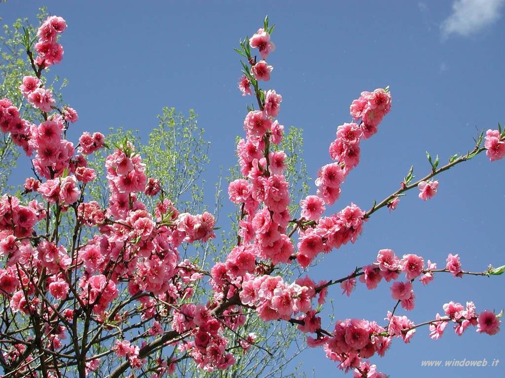 Biblioteca i e s le n felipe ya es primavera for Immagini per desktop primavera