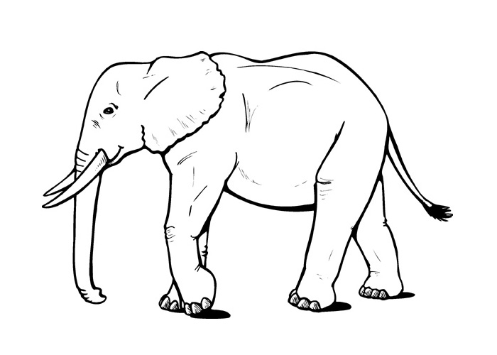 Cartoon Elephant Coloring Pages Cartoon Coloring Pages Elephant Coloring Pages