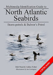 MULTIMEDIA ID GUIDE TO NORTH ATLANTIC STORM-PETRELS. CLICK COVER BELOW TO FIND OUT MORE...