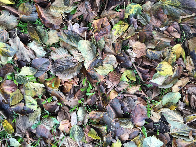 Lime (Linden) leaf-fall.  Hayes, 4 November 2015.