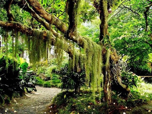 Get Fun Here Gardens Of Maui