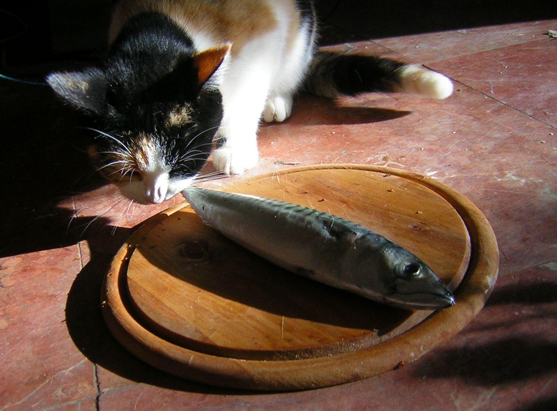 gat gos menjar natural homeopatia acupuntura integrativa veterinària